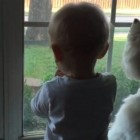 Dog and Human Sibling Virtually Hypnotized by Duck in Garden