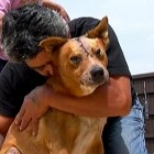 Severely Injured Man Leaves Accident Scene to Find His Missing Dog