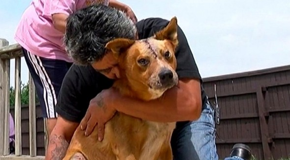 5.2.16 - Severely Injured Man Leaves Accident Scene to Find His Missing Dog1