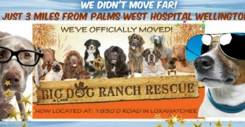 Town Mayor Threatens to Cut Power at Big Dog Ranch Rescue
