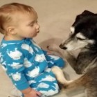 Baby Falls Asleep on Warm, Fluffy Dog
