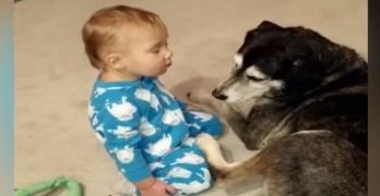 Baby Falls Asleep on Warm, Fluffy Dog