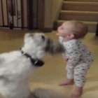 Baby Mimics Dog Begging for a Treat
