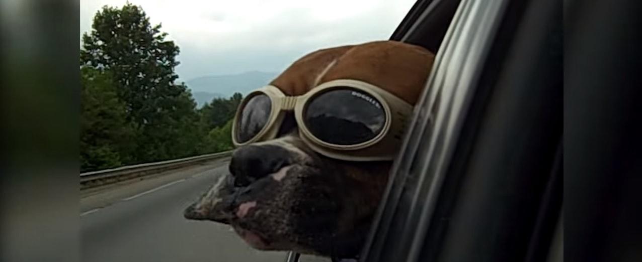 Hilarious Animals Doing Funny Stuff