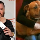 "Ricky Gervais Slams ""Psychopath"" Dog Fighters"