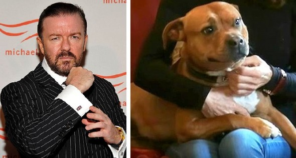 5.24.16 - Ricky Gervais Slams Dog Fighting0