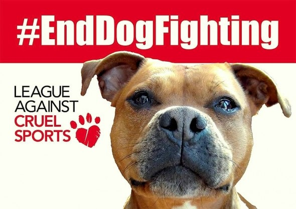 5.24.16 - Ricky Gervais Slams Dog Fighting5