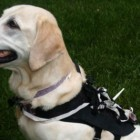 Wearable Computer for Dogs Assists With Training