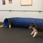 Dogs Teach Us How to Play With a Giant Tube!