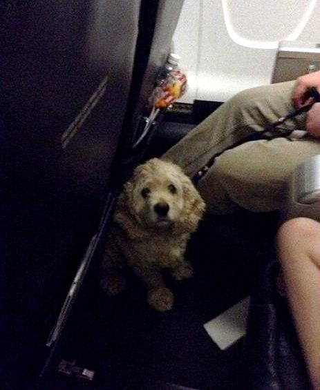 5.26.16 - Canadian Pilots Breaks the Rules to Fly Pets to Safety During Wildfire9