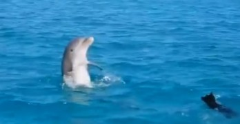 Dog Joins Dolphin for a Swim in the Ocean