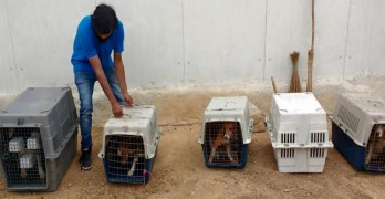 156 Beagles Are Freed from Testing Facility