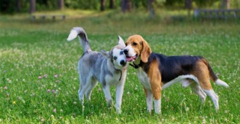 The Chemicals You Use on Your Lawn Have Been Linked to Cancer in Dogs