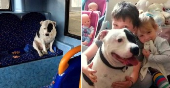 PUPDATE:  Dog Dumped on Bus Reunited with His Family