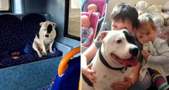 5.3.16 - Dog Dumped on Bus Reunited with Family3