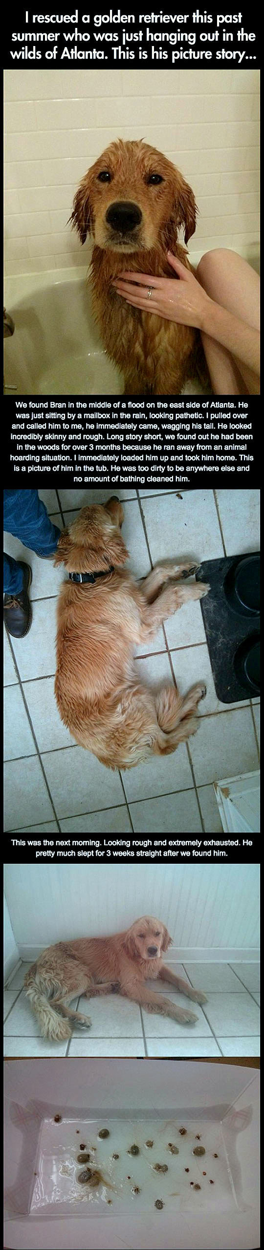 5.3.16 - Photo Journey of a Dog Rescued During a Flood1