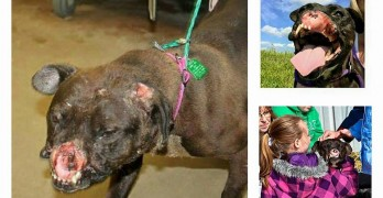 Terribly Disfigured Dog Triumphs Over Her Abusers