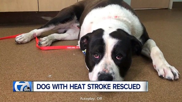 5.31.16 - Reporter Saves Dog Dying of Heatstroke