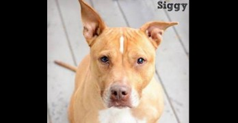 LWD Presents: Signora, Our Adoptable Dog of the Day!