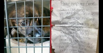 Dog Left at a Florida Shelter With Note Explaining Why