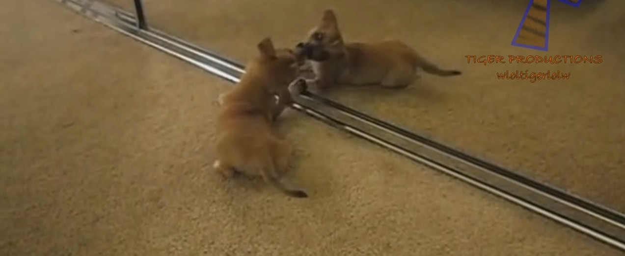 Puppies Seeing and Doing Things for the First Time