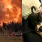 Heroic Man Breaks Down Doors to Save Dog Trapped in Massive Fort McMurray Wildfire
