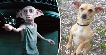 Dog That Looks Like Dobby From Harry Potter Seeks New Family