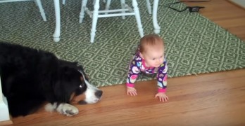 Meanie Dog Knocks Over Baby