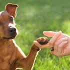 Dog Manners — The Value of Classes