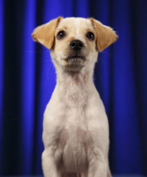 Puppy Bowl Publicity shot