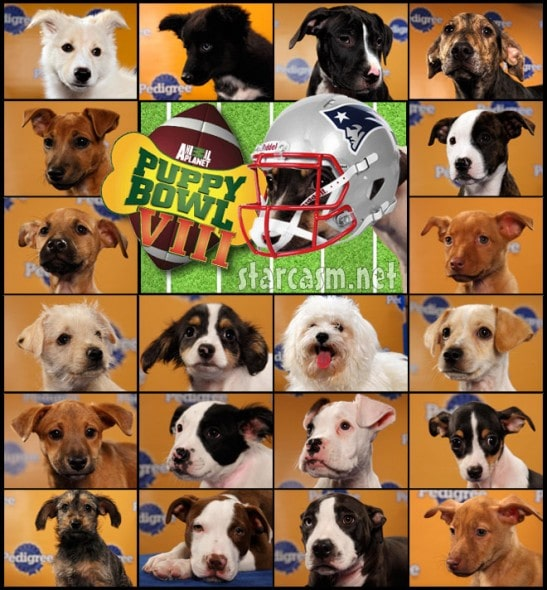 Puppy Bowl card