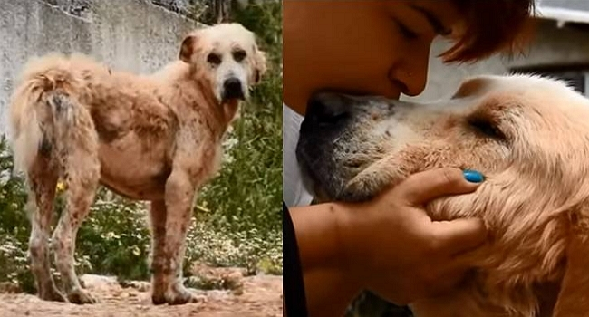 Touching Rescue by Greek Organization SPAZ
