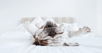 Serena Hodson: What Makes a Pet Photographer Click