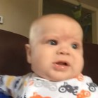 Friday Funny: Five-Month-Old Takes On Two Labs in a Howling Contest