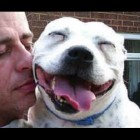 Brighten Your Afternoon With Pit Bulls Acting Cute!