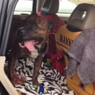 """PUPDATE: """"Crying"""" Shelter Dog Juice Finds His Forever Home!"""