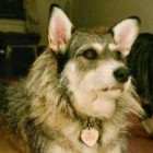 The Ginny Fund: The Legacy of A Rescue Dog Who Paid It Forward