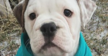 Puppy Deaths Linked To Wisconsin Mall Pet Store