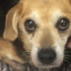 DUMPED! Crated Beagle Found In Virginia Beach Ditch