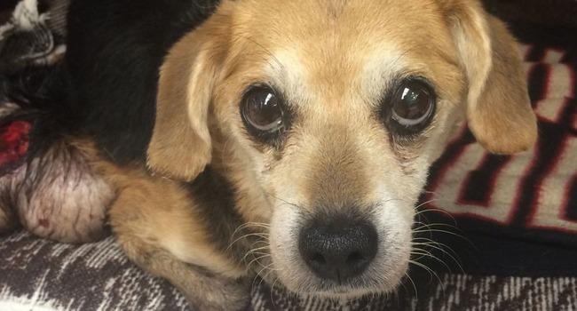 DUMPED! Crated Beagle Found In Virginia Beach Ditch