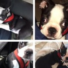 Student Returns Michael Steel's Missing Dog, Receives $10K Reward