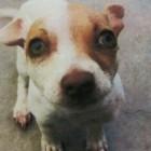 Terrier Tests Positive For Meth, Heroin