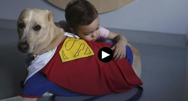 "Video: ""Courtroom Dogs"" Help Children Find Their Courage"