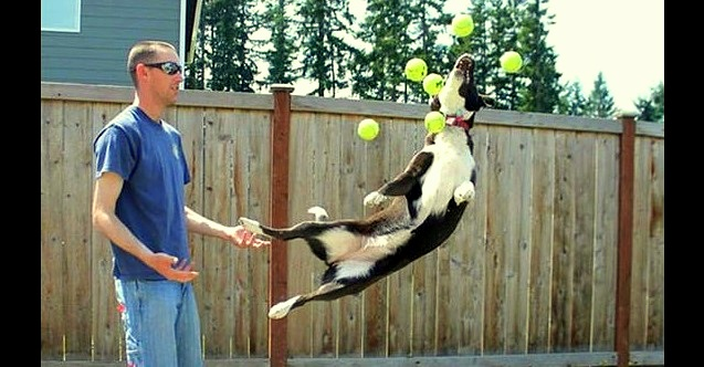 The Magical Moment When You Give 60 Tennis Balls to 3 Dogs