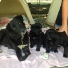 Mother Dog with Missing Limb and Her Babies Rescued from Roadside in California
