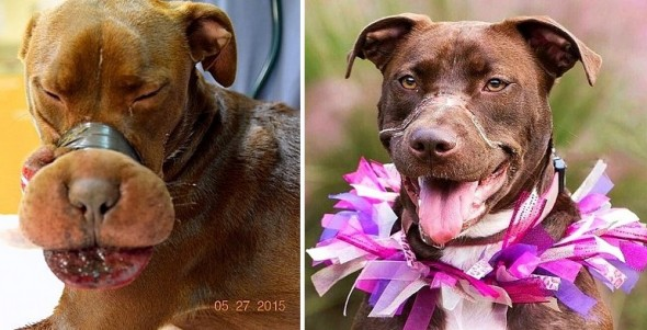 6.1.16 - Caitlyn the Taped Dog, One Year Later2