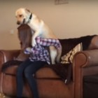 Dog Demands Piggyback Rides When too Pooped to Participate
