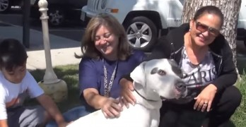 Pirate the Pit Bull and His Special Human Friend Who Reads to Him