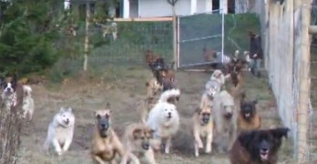 Man Fences in Four Acres to Build Rescue Sanctuary at His Own Expense