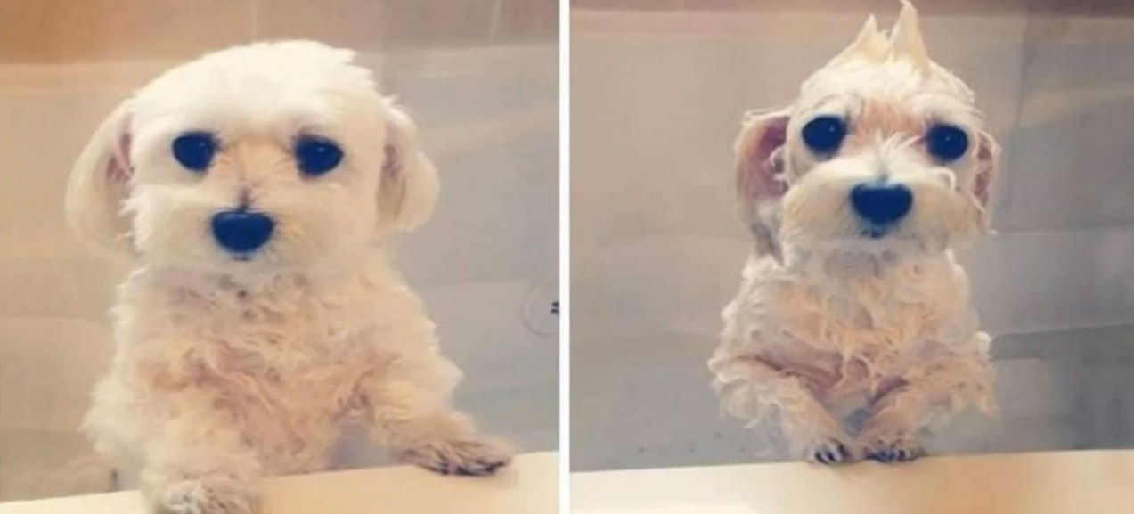 Hilarious Before and After Results from Pets Having a Bath
